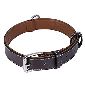 Recommended Space Between Dog Collar And Neck