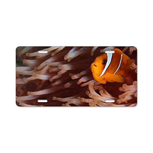 Kefanlk Alumina Animal Clownfish Sea Anemone Fish License Plate Frame + Chrome Screw Caps