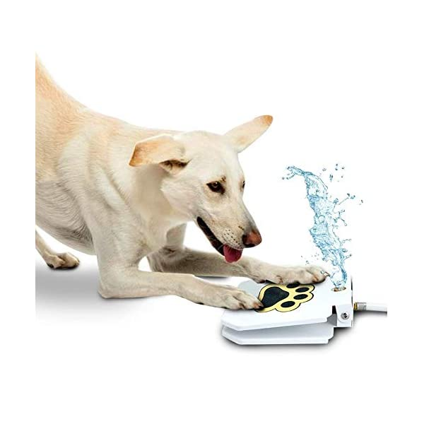 Trio Gato Outdoor Dog Pet Water Sprinkler Easy Activated Dog Water Fountain Toy – Upgraded 2019 + Bonus