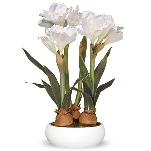 The white company flowers the best amazon price in savemoney national tree amaryllis 20 white flowers mightylinksfo