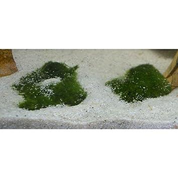 Unterwassergras Bodendecker Fur Aquarien Und Gartenteiche Amazon