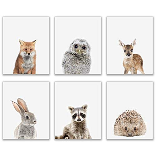 Crystal Baby Woodland Animals Poster Prints - Set of 6 (8x10) Adorable Furry North American Portraits Wall Art Nursery Decor - Owl - Deer - Bunny - Raccoon - Hedgehog - Fox