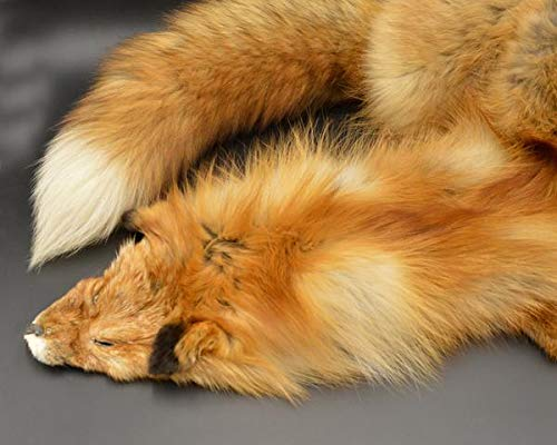 """Tanned Red Fox Winter """"Heavy Fur"""" Western Extra Large Premo (rfhwPremo) by DakotaLine (Image #5)"""