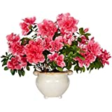 Vamsha Nature Care Live Azalea Flower Plant with Pot