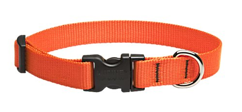Wide Nylon Collar - LupinePet Basics 3/4