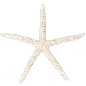 starfish decorative decor pieces