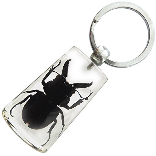 Real Insect Key Chain - Blackish Stag Beetle ()