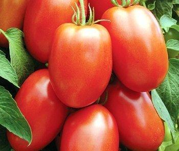 David's Garden Seeds Tomato Paste Roma DGSOM323 (Red) 100 Organic Heirloom Seeds