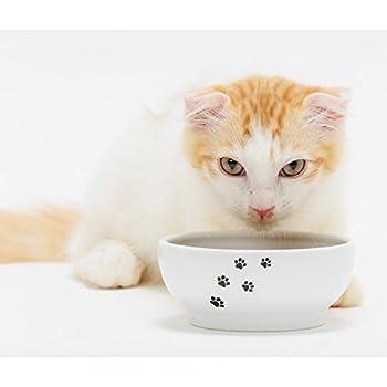Amazon.com : Necoichi Anti-Spill Cat Food Bowl, Effective