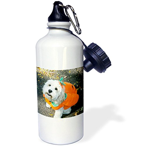 Danita Delimont - Halloween - Pet Halloween contest at Thompkins Square Park, New York City. - 21 oz Sports Water Bottle (Dog Costume Halloween Nyc)