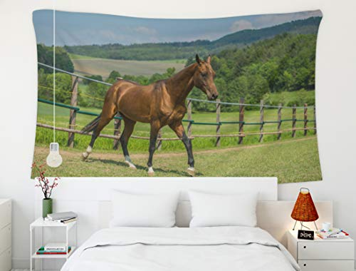 - Crannel Psychedelic Tapestry Young Reddish Brown Shiny Stallion Horse Breed from Walking in Pasture Sunny Spring Tapestry 60x50 Inches Wall Art Tapestries Hanging for Dorm Room Living Home Decorative