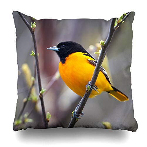 Ahawoso Throw Pillow Cover Square 16x16 Limb Bird Baltimore Oriole Perched On Songbird Budding Tree Nature Orange Spring Avian Pillowcase Home Decor Cushion Pillow Case