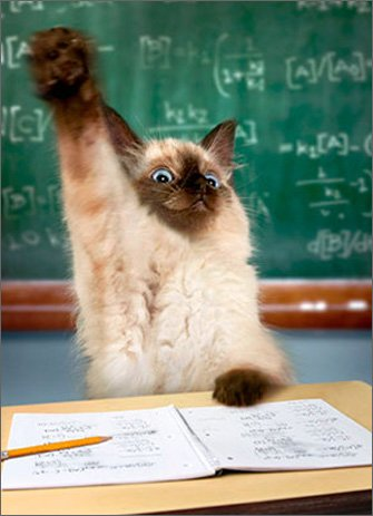 (Cat Raising Hand Funny Graduation Card)