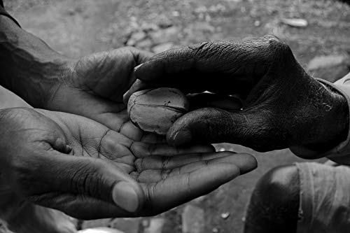 - Home Comforts Canvas Print Kola Nut African Hands Offering Vivid Imagery Stretched Canvas 32 x 24