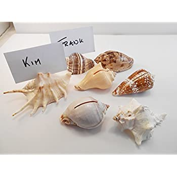 Set of 50 Genuine Seashell Place Card Holders Beach Wedding Favor Nautical Party Decor Sea Shell Table Sets