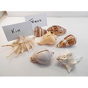 41VX-M%2BpgBL._SS300_ Seashell Wedding Favors & Starfish Wedding Favors