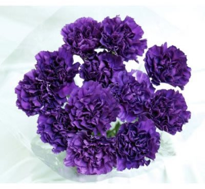 140 Fresh-cut Moonshade Purple Carnations (advance ordering recommended) by The Purple Garden