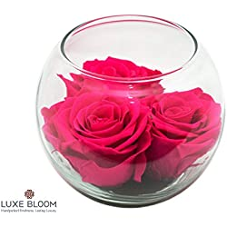 "Luxe Bloom Sangria Preserved Roses | Lasts 60 days | 3 sangria (hot pink) roses & greens in a 4"" glass bubble 