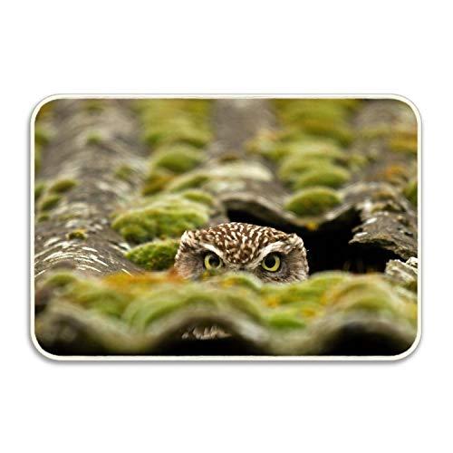 Niaocpwy Owl Non-Slip Door Mat Doormat Door Mats Rug Entrance Mat Entry Rugs 16 x 24 inch