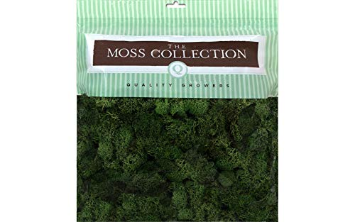 Reindeer Topiary (Quality Growers QGR2051 Moss 5.68qt Reindeer Basil)