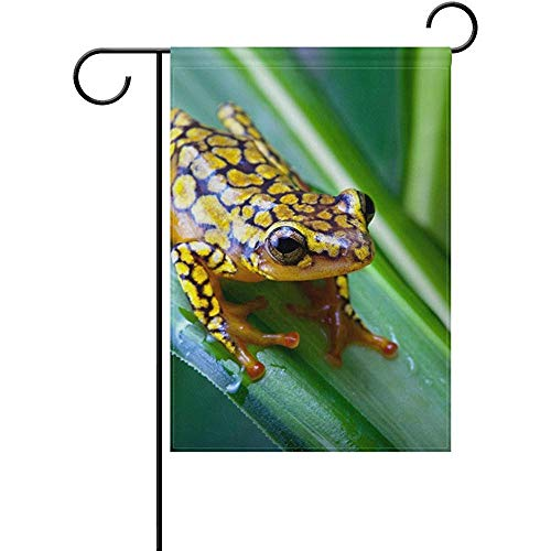 (Yunnstrou Garden Flag Harlequin Poison Dart Frog House Home Flags 12 x 18 inch Double Sided Decorative Winter Holiday Welcome Yard Flag )