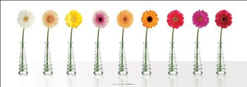 Gerbera Daisies Spectrum Decorative Floral Photography Poster Print - Daisies Poster