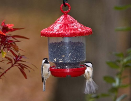 Songbird Essentials SE7013 Clinger Feeder