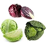 HATCHMATIC Seeds Package: Danish Ball Head 50 Seeds: Organic Heirloom Cabbage Vegetable Seeds 10 Varietgmo to Choose from Non-GMO