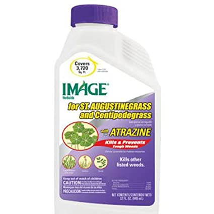 Amazon Image For St Augustine Grass With Atrazine Concentrate