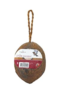Chapelwood whole coconut bird suet treat for Whole coconut bird feeders
