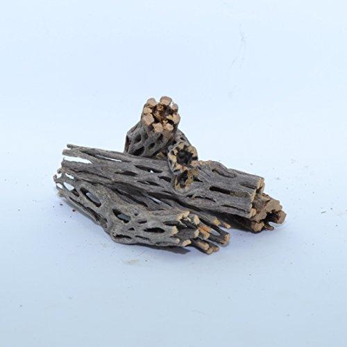 NApremium Natural Cholla Wood | 6 Pieces of 3'' Long Natural Cholla Wood for Aquarium Decoration, Hermit Crabs, Shrimp by NilocG Aquatics