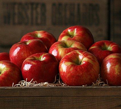 Image result for honeycrisp apples