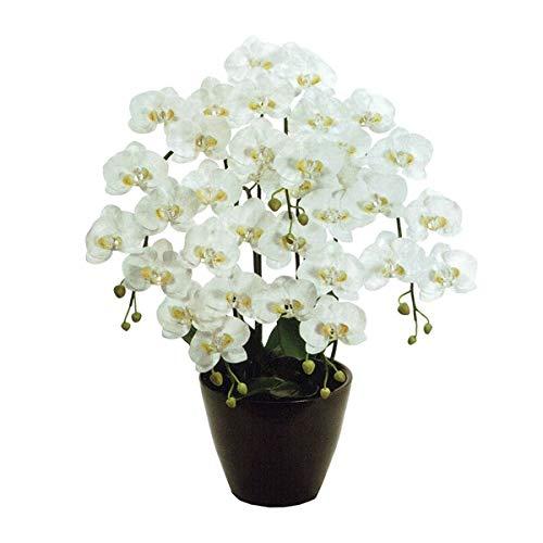 人工観葉植物 ピュアオーキッド5本立(ファレノーブル)ホワイト 光触媒加工 高さ75cm zv1080 (代引き不可) インテリアグリーン 造花 B07SYH6MWH