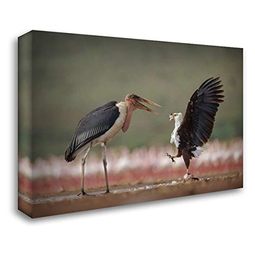 African Fish Eagle quarreling with Marabou Stork Kenya 24x17 Gallery Wrapped Stretched Canvas Art by Fitzharris, Tim ()