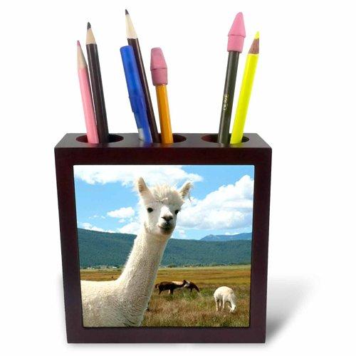 New Mexico-Us32 Jmr0359-Julien McRoberts-Tile Pen Holder 3dRose ph/_92663/_1 Victory Ranch Alpaca Farm 5-Inch Mora