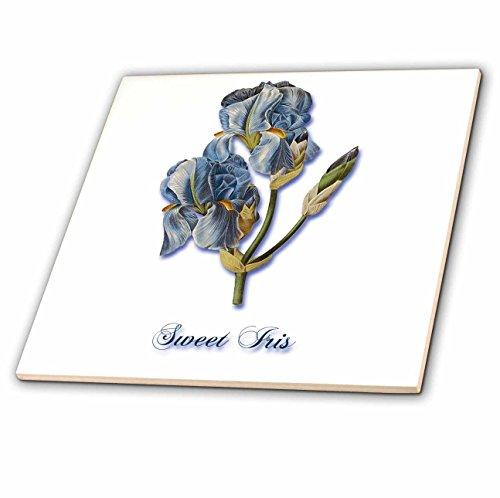 3dRose ct_171218_1 Sweet Iris, Botanical Print of a Light Blue Bearded Iris-Ceramic Tile, 4-Inch
