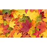 Echo 17.3 In. X 29.9 In. Harvest Mat - Fall Leaves Design