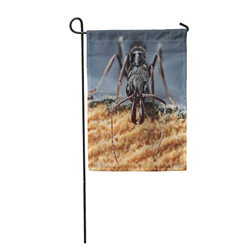 Semtomn Garden Flag 12x18 Inches Print On Two Side Polyester
