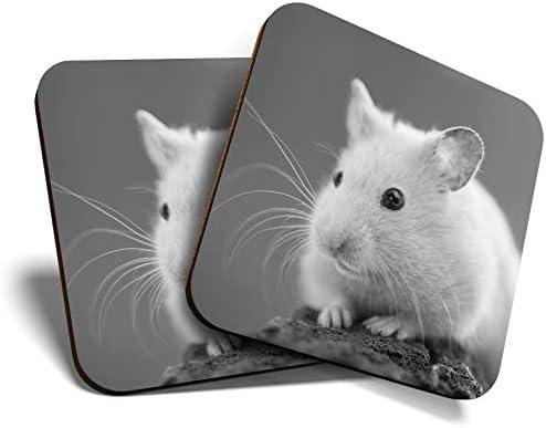 Great Coasters (juego de 2) cuadrado BW – Hermoso hámster mascota animales roedor/brillante calidad posavasos protección de mesa para cualquier tipo de mesa #40961: Amazon.es: Hogar