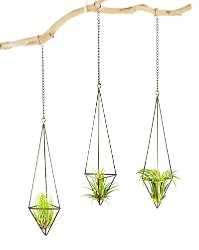 Mkono 3 Pack Hanging Air Plant Holder Himmeli for Tillandsia Airplants Display (with Chains), Bronze by Mkono