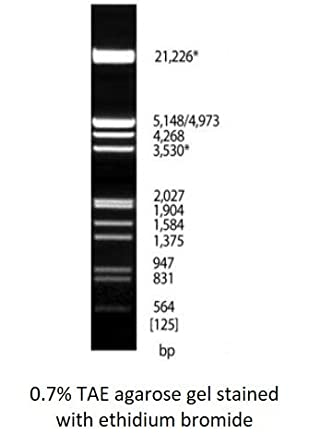 Amazon.com: Lambda DNA/ecori + traseras III marcador ...