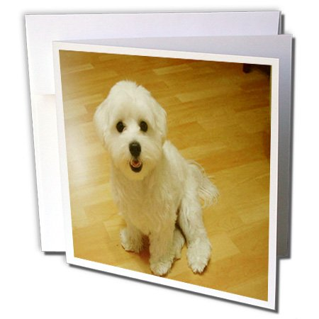 (3dRose Maltese Puppy - Greeting Cards, 6 x 6 inches, set of 12 (gc_49277_2))