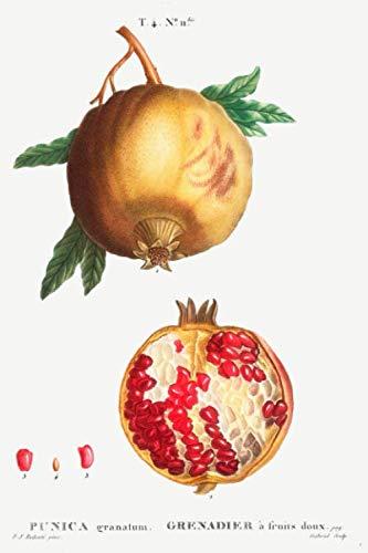 """seine Kerne sind eine fruchtige Erfrischung Granatapfel-Baum /""""Punica Granatum/"""""""