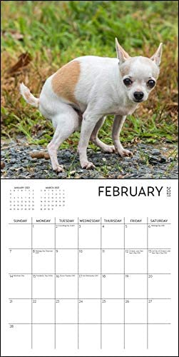 12 x 12 inch White Elephant Dog Pooping Calendar 2021 Gag Gift Funny Gift Secret Santa