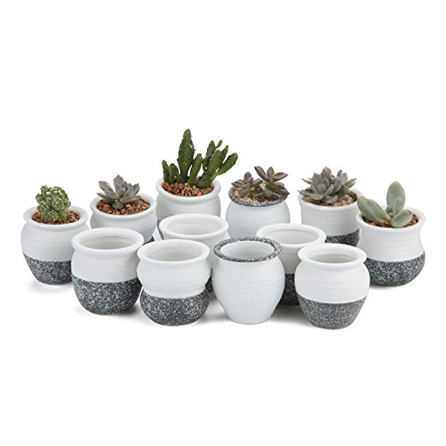 T4U 2.25 Inch Ceramic Mini Korea Style Snow Serial Full Set Succulent Plant Pot Cactus Plant Pot Flower Pot Container Planter Package 1 Pack of 12]()