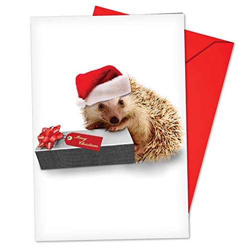 12 'From the Hedge Present' Boxed Christmas Cards with Envelopes 4.63 x 6.75 inch, Festive Hedgehog Holiday Notes, Cute Hedgehog in Santa Hat Christmas Cards, Adorable Christmas Stationary B6541EXSG