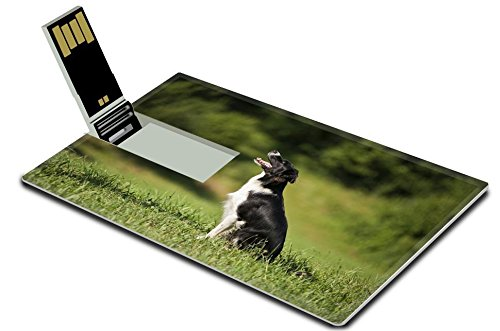 Luxlady 32GB USB Flash Drive 2.0 Memory Stick Credit Card Size Young border collie sitting on grass close up IMAGE -