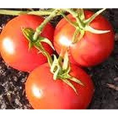 New Yorker Tomato Seeds (25 Seeds) : Garden & Outdoor