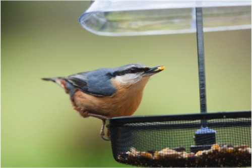 Best wild bird seed brand