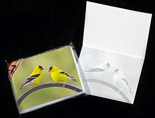Goldfinches Gold Finches Yellow Birds Male Spring Fine Art Photography Note Cards 10 or 20 Pack w/Envelopes
